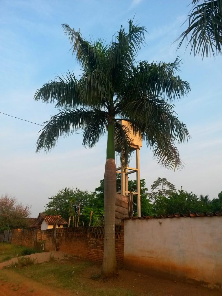 Una de las palmeras de la zona, ese pueblo lindo que me dejó con ganas de visitarlo nuevamente