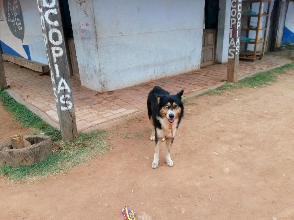 Me emocioné con el can que encontré con dirección a la plaza principal, no pude evitarlo y aquí lo tienen.